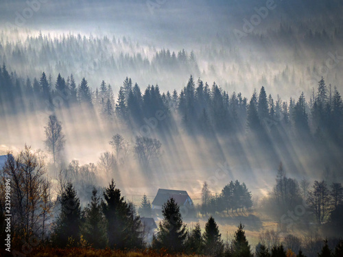 Poster Morning with fog OLYMPUS DIGITAL CAMERA