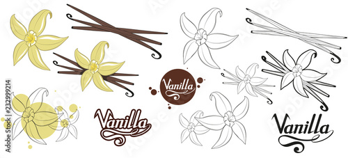 ręcznie rysowane fasola waniliowa, pikantny składnik, logo kwiat wanilii, zdrowa żywność ekologiczna, przyprawa wanilia na białym tle, zioła kulinarne, etykieta, jedzenie, naturalne zdrowe jedzenie, grafika wektorowa do projektowania