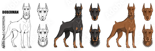 doberman pinscher, american doberman, pet logo, dog doberman, colored pets for d Tableau sur Toile