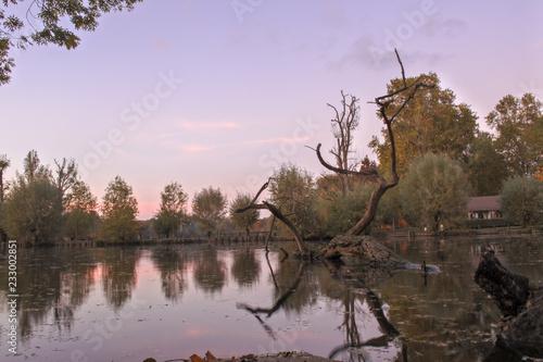 Papiers peints Lilas Sunshine on the lake