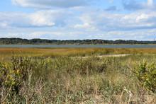Grasslands On Assateague Island