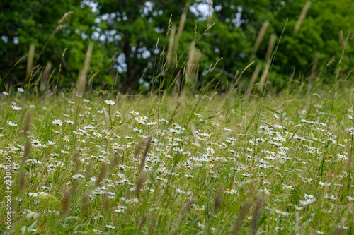 Foto op Canvas Groene summer green meadow with abstract pattern from grass and flowers