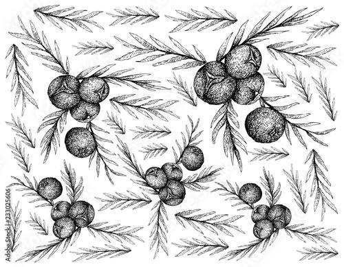 Juniper Berries Isolated on White Background Wallpaper Mural