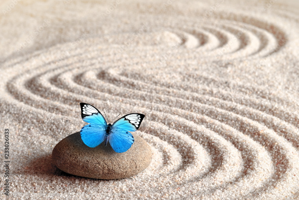 Fototapeta A blue vivid butterfly on a zen stone with circle patterns in the grain sand.