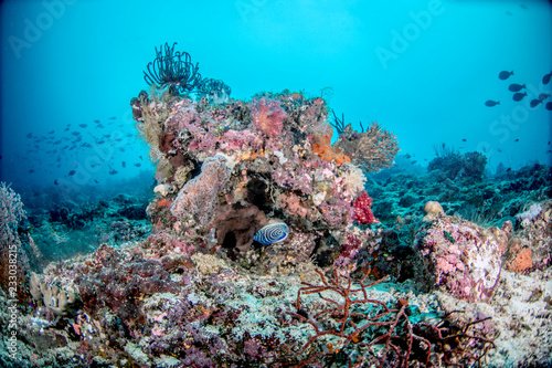 Staande foto Koraalriffen Beautiful, colorful, and healthy coral reef underwater from tropical Indonesia