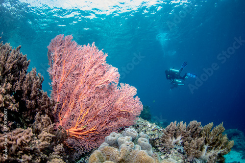 Fotografie, Obraz  Beautiful, colorful, and healthy coral reef underwater from tropical Indonesia