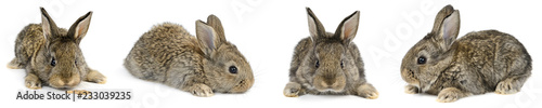 Collection young rabbit with different camera angles isolated on white