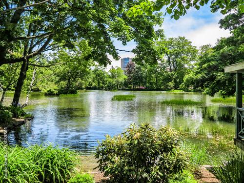 Fotografie, Obraz  Pond in a Park