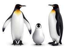 Penguin Realistic Set