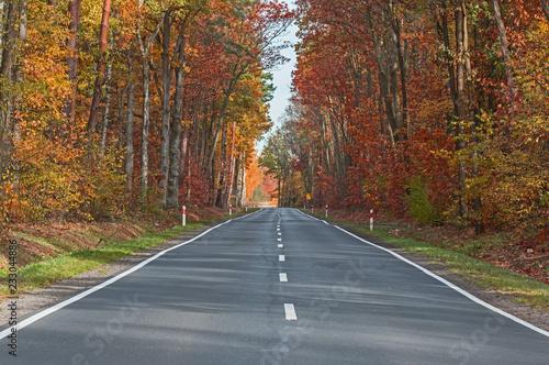 Foto op Plexiglas Weg in bos Afaltowa droga przez jesienny las.