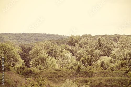 Fotografía  трава и деревья солнечным ярким днём