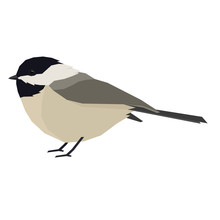 Forest Wild Life Isolated Vector Animals Geometric Chickadee