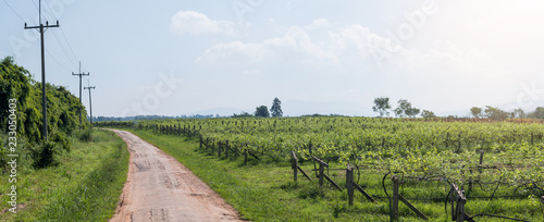 Poster Landschap Vineyard landscape in Thailand