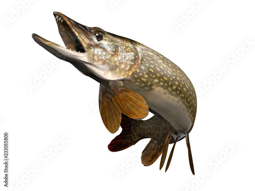Fotografie, Obraz  Perfect pose for common pike fish up in air clean 3d render