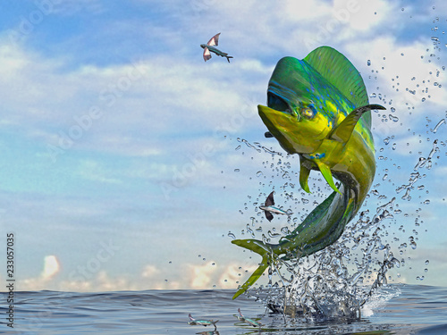 Fototapeta Mahi mahi dorado fish  jumping to catch flying fished in ocean 3d render