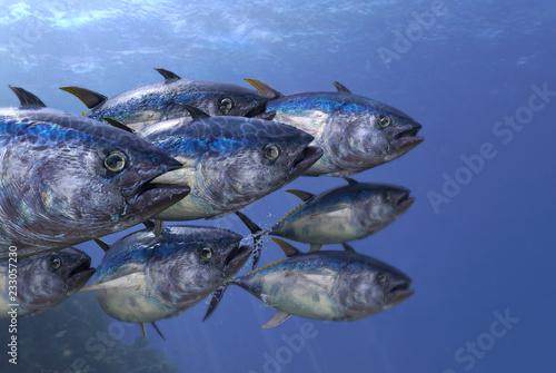 Close up shot of tunas school underwater 3d render Wallpaper Mural