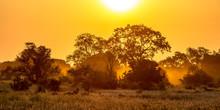 Orange Morning Light On S100 K...
