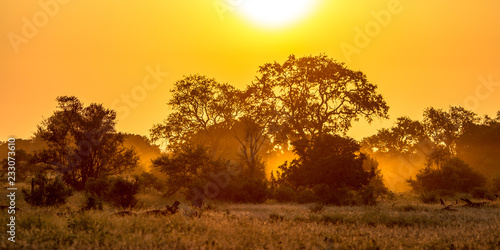 Foto op Plexiglas Oranje Orange morning light on S100 Kruger