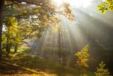 Fototapeta Na sufit - jesień w parku