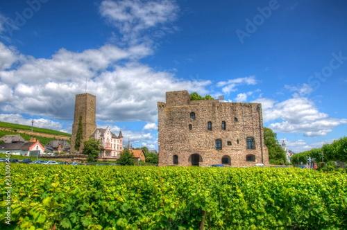 Vineyard near medieval castle fortress Boosenburg, Ruedelsheim, Hessen, Germany Wallpaper Mural