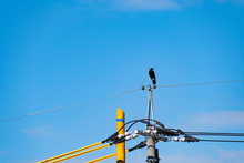 A Crow On The Pole