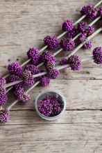 Branch Of Purple Beautyberry O...