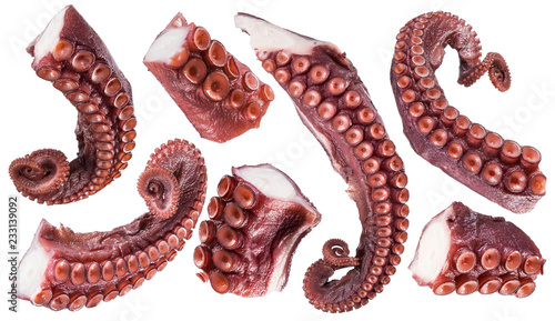 Pieces of cooked devil-fish or octopus arms. Clipping paths.