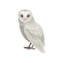 Flat Vector Icon Of Snowy Owl,...