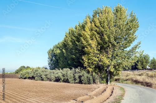 Field in the province of Granada