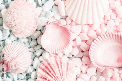Fototapeta  Sea shells, natural pink and blue stones as  background