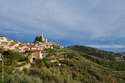 Castellaro with olive groves, Liguria, Italy, Europe