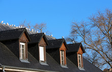 Flock Of Seagulls On A Roof