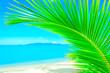Beautiful Caribbean beach. Beach with palm tree over the sand