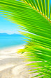 Beautiful beach. View of nice tropical beach with palms around. Holiday and vacation concept. Tropical beach. Beautiful tropical island.