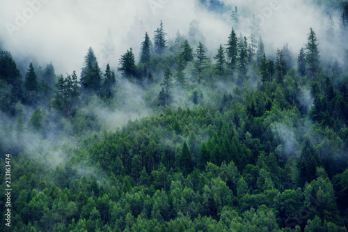 Obraz Misty landscape with fir forest. Morning fog in the mountains. Beautiful landscape with mountain view and morning fog. - fototapety do salonu