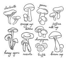 Vector Outline Mushrooms On White Background. Healthy Organic Food Illustrations