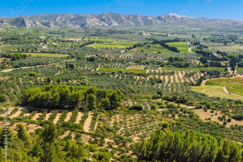 Cuadros en Lienzo  Olivenbäume im Tal von Les Baux-de-Provence