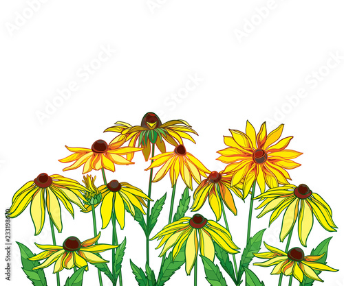 Vector bouquet with outline Rudbeckia hirta or black-eyed Susan flower, green leaf and bud in yellow isolated on white background Fototapeta