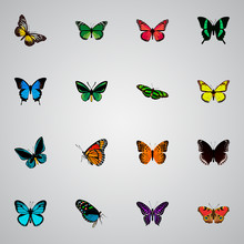 Set Of Beauty Realistic Symbols With Hypolimnas, Polyommatus Icarus, Papilio Ulysses And Other Icons For Your Web Mobile App Logo Design.