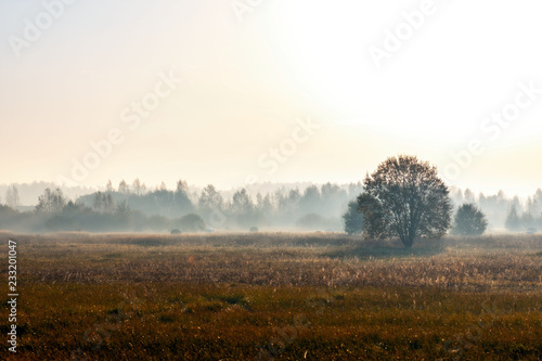 Foto op Aluminium Wit Abstract autumn rural landscape in the foggy morning.