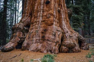 Ogromno stablo u Nacionalnom parku Sequoia, Kalifornija, SAD