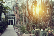 Tropical Path With Green Tropical Plants, Palms And Catuses With Sunset Sun At Botanical Garden In Europa