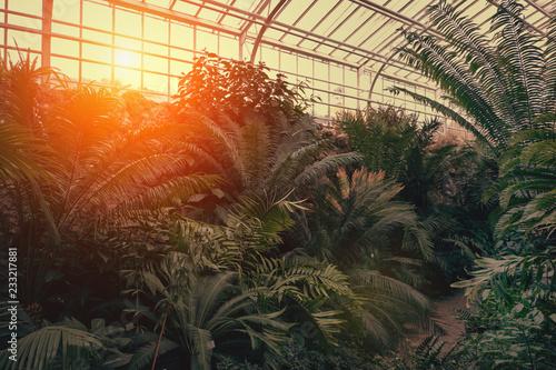 Αφίσα  Tropical path with green tropical plants, palms and catuses with sunset sun at b
