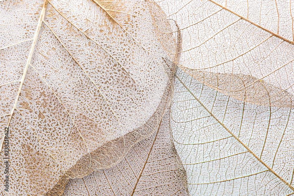 Fototapeta Closeup view of beautiful decorative skeleton leaves