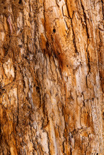 Abstract Background Tree Bark Texture