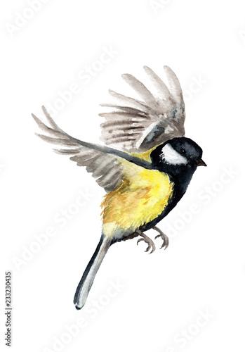 watercolor drawing of a bird. tit in flight Fototapete