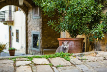 Cat Hiding In A Medieval Village Of Tuscany, Italy