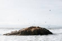 Dozens Of Birds Flying Over Rock In Sea