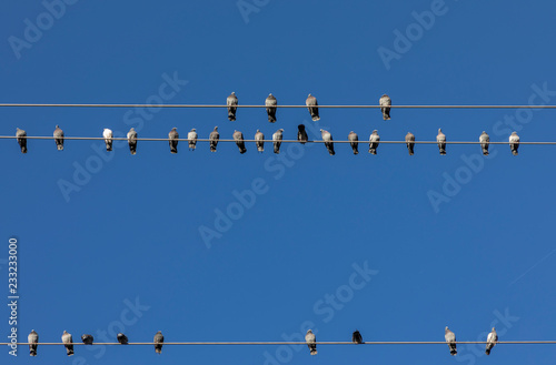 doves on power line