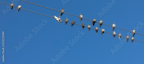 doves on power line